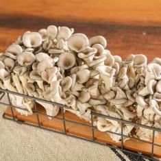 무농약 느타리버섯 2kg 이미지