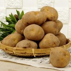 [농협] 무농약 감자 1kg 이미지