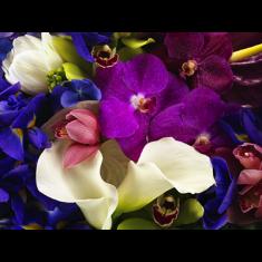 [아자몰에서만 만날 수 있는 가격][갤러리 플로바리스] 프리미엄 플라워 캔버스 작품 - Studio Flowers 이미지