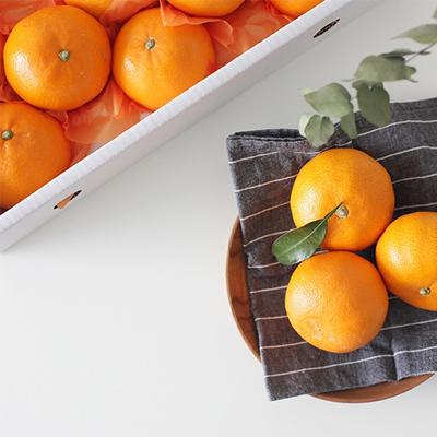 [설이왔소] 특가찬스! [진원] 새콤달콤한 향 제주 천혜향 선물세트 3kg 5kg